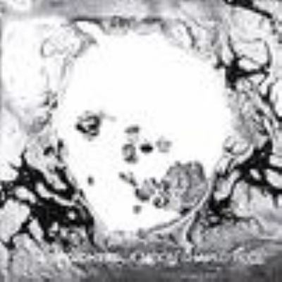 Cover image for A moon shaped pool