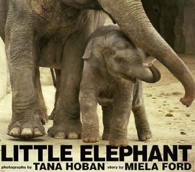 Details about Little Elephant