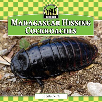 MADAGASCAR HISSING COCKROACHES