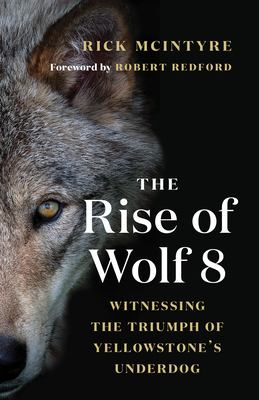 The Rise of Wolf 8: Witnessing the Triumph of Yellowstone's Underdog book cover